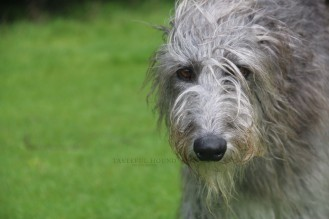 Rora, Deerhound