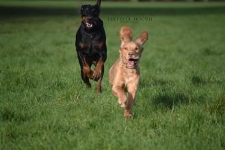 Winnie and HUgo 2 watermark