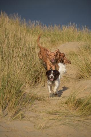 Enjoying the sand dunes