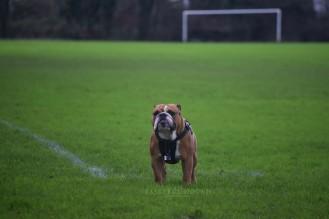 George, British Bulldog