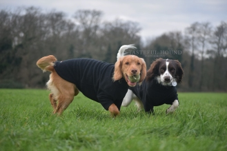 Hugo and Mia, Working Cocker Spaniels