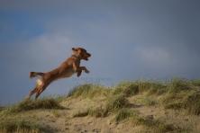 Hugo leaping for joy