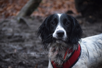 sprocker profile