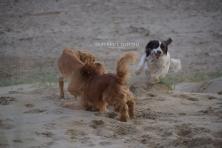 Leo jumping on Hugo