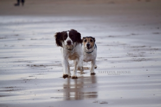 Mia, Working Cocker Spaniel and Jack Russell