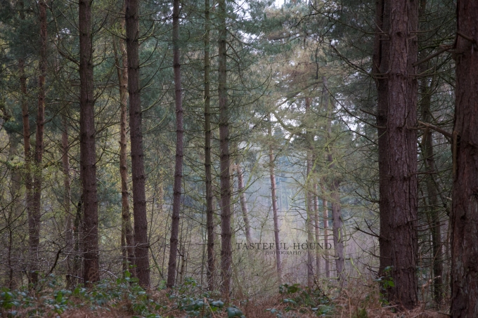 Delemere Forest