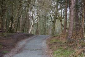 Blakemere Trail